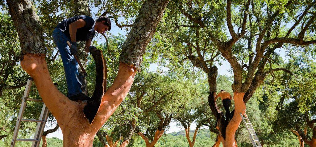chene-liege-arbre